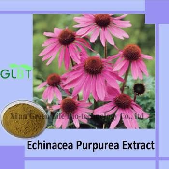 Echinacea Purpurea Extract GMP Supplier