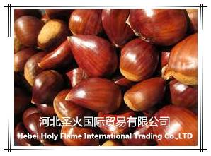high quality chestnut with competitive price