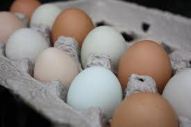 FARM FRESH WHITE EGGS, FARM FRESH BROWN EGGS, CHICKEN EGGS