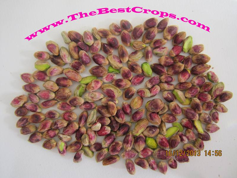 Pistachio kernel from Iran's farm