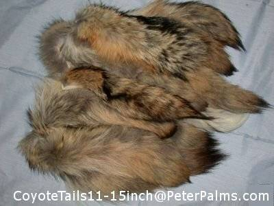 Coyote Fur Tails