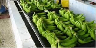 Del Monte Premium Banana