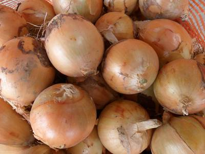sell yellow onion