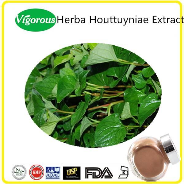 High quality Kosher Halal herba houttuyniae extract powder