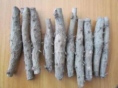 Teak Rhizome - Big - Teak, Black wood, Siamese Rosewood, Rosewood - Agarharvest
