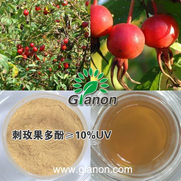 Rose Hip Extract Polyphenols 10%