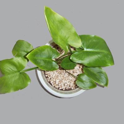 Horticulture vermiculite/Agriculture vermiculite