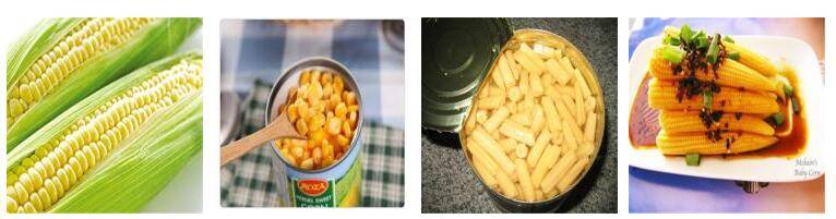 Canned Sweet Corn, Canned Corn Kernel, Canned Corn, Canned Vegetables