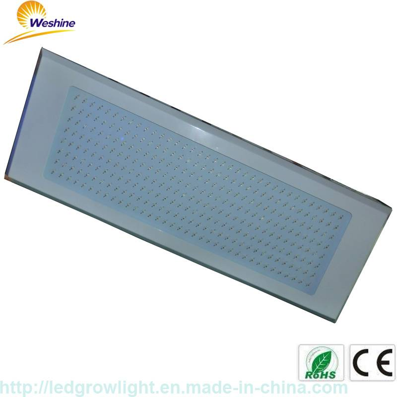 600W led grow light best sales at stable quality