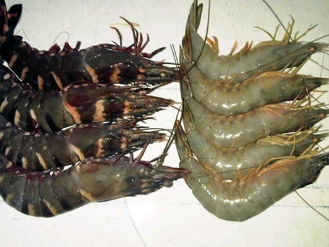 White sea shrimp and Black Tiger Shrimp