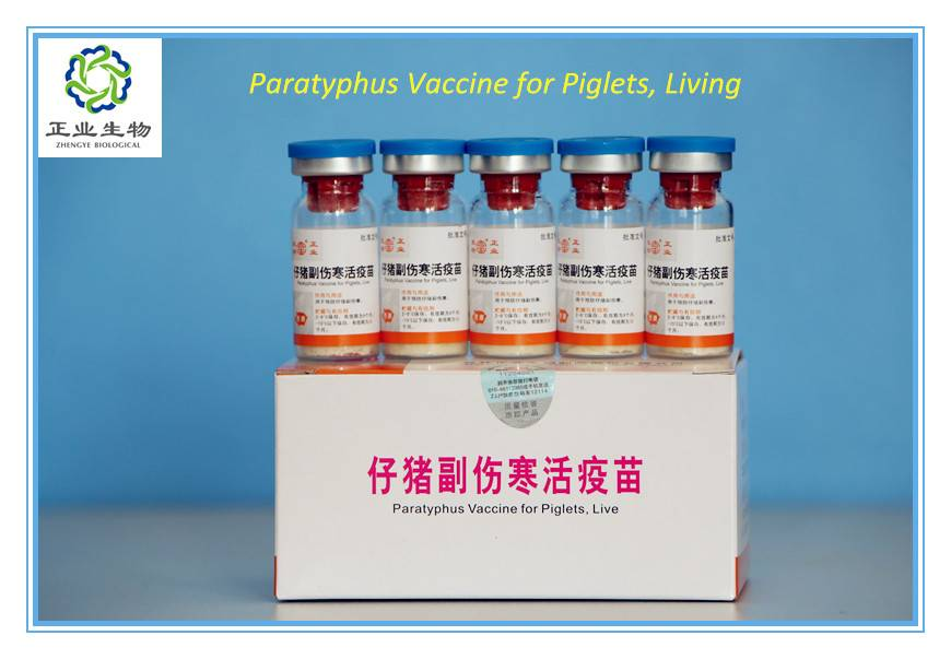 Paratyphus Vaccine For Piglets, Live.
