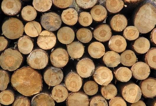 Plantation Acacia Mangium Round Logs