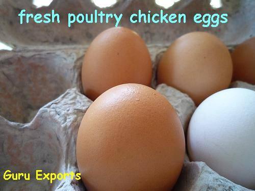 Indian Farms, Chicken Farms, Poultry Farms, Eggs Farms, Hen Farms.