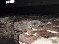 Wet Salted & Dry Salted Donkey Hides and Cow Hides, Cattle Hides Inquire now