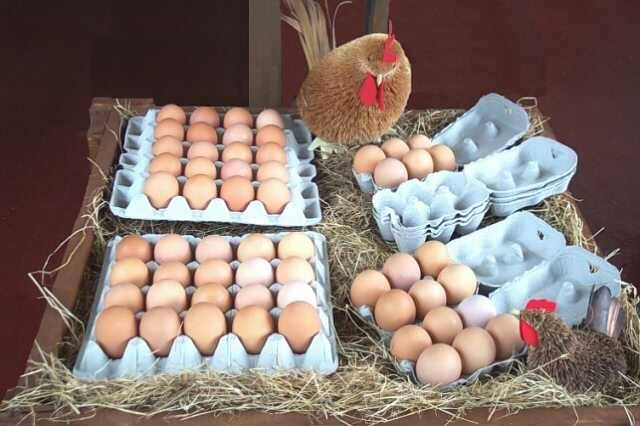 SUPPLIERS OF FRESH BROWN EGG