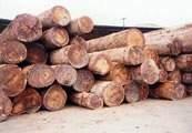 Round Log Origin Sabah