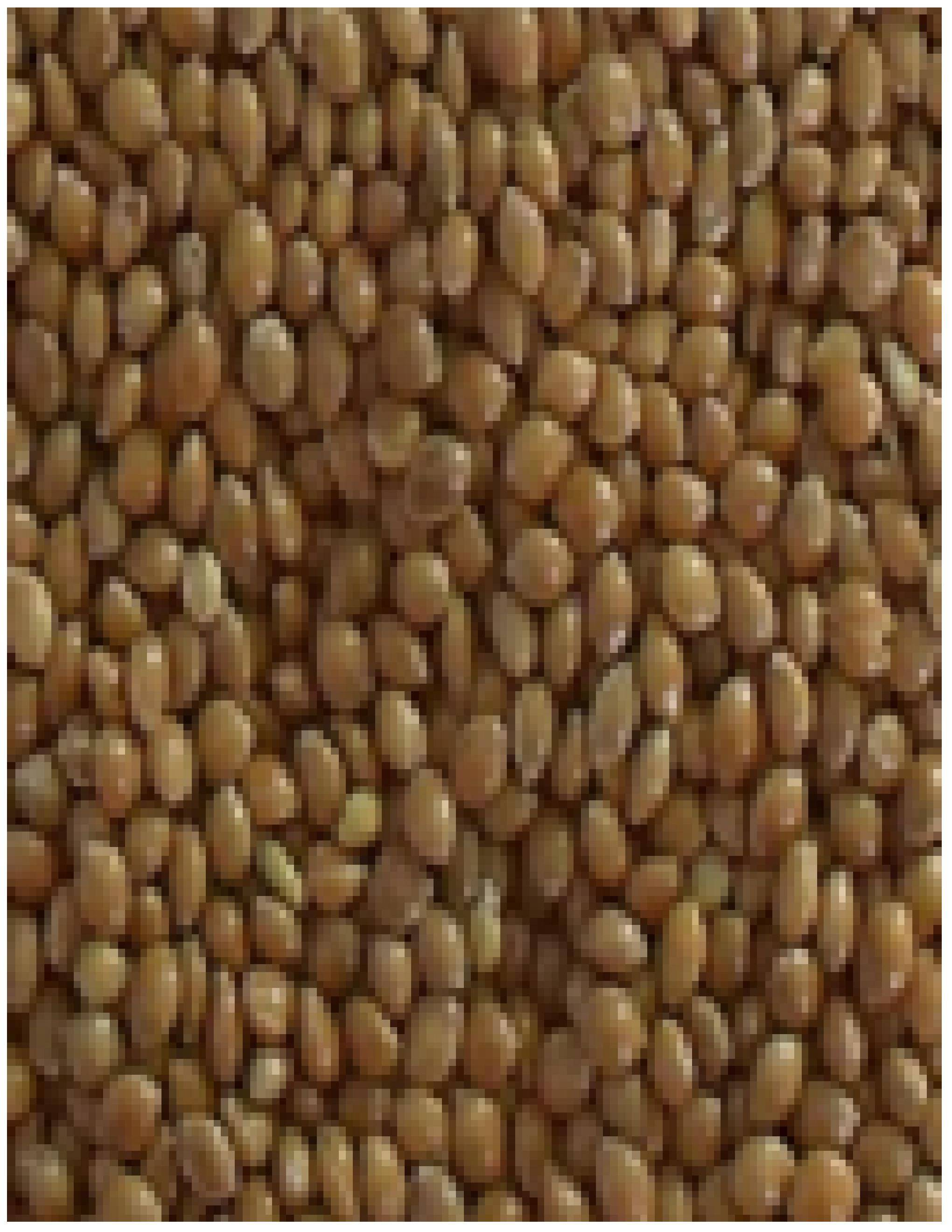 we can supply millets different varieties