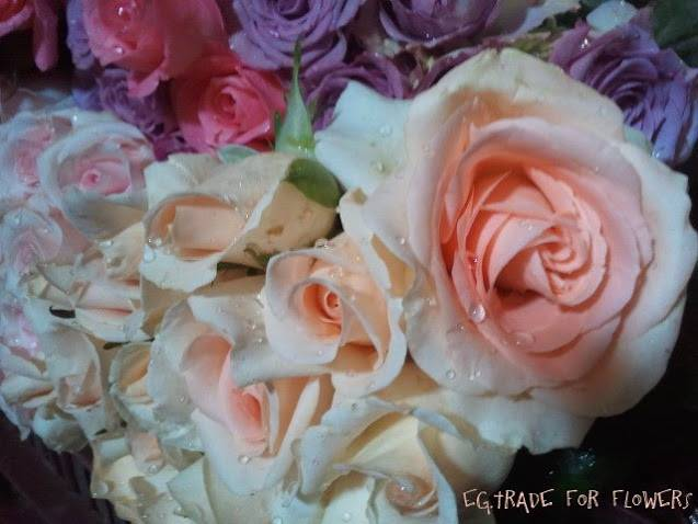 Roses with high quality and competitive prices