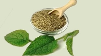 Herbs , Ayurveda ( Indian Herbal System) Raw Material from INDIA