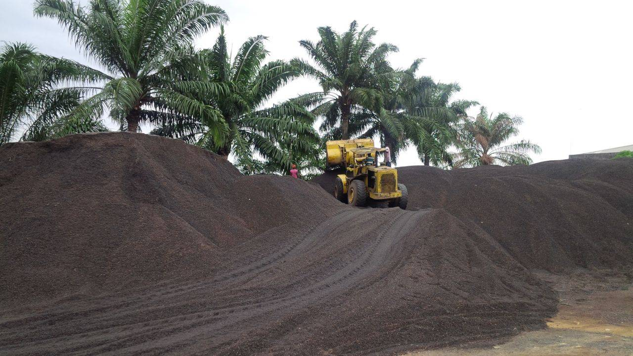 supply PKS(Palm Kernel Shell)