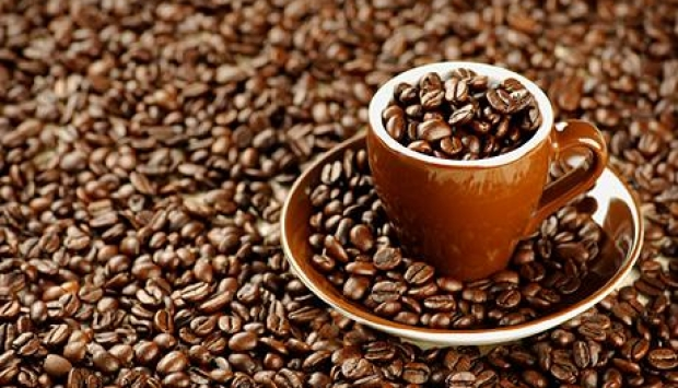 Robusta and arabica Coffee For sale First Grade