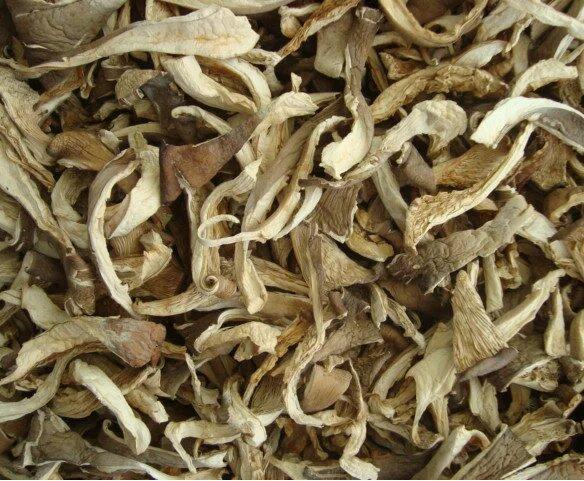 Dried mushroom Fungus Oyster Mushroom
