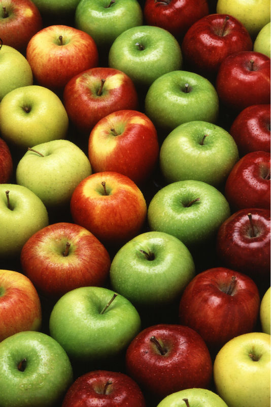New arrival Fresh Fuji apples