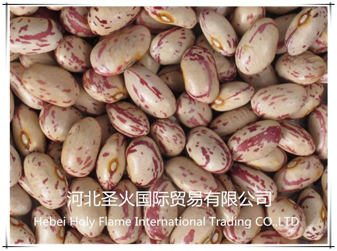 speckled kidney beans with competitive price