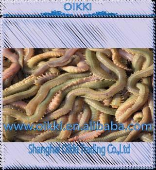 Living ragworm/Live bait