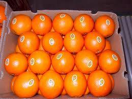 Fresh Navel Oranges for sale