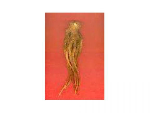 angelica extract (sales2 at lgberry dot com dot cn)