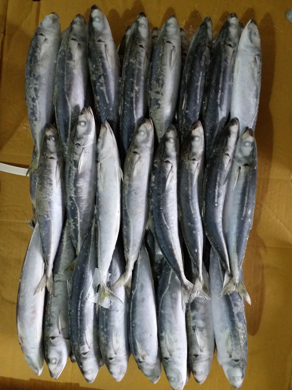 muroaji fish