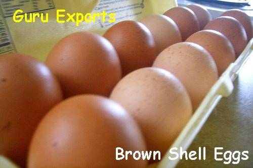 indian Exports Of Fresh Chicken Eggs, Supply Of Poultry Shell Eggs