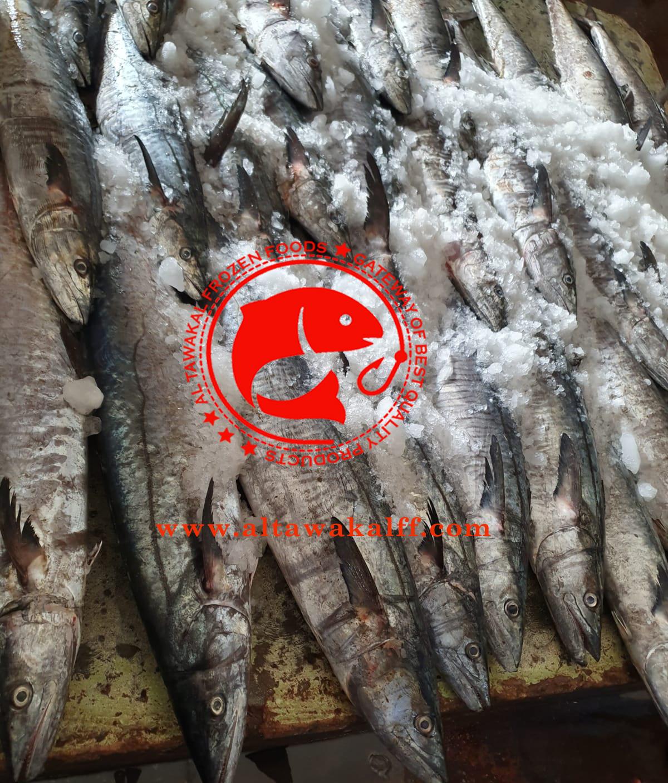 Frozen King Fish Whole