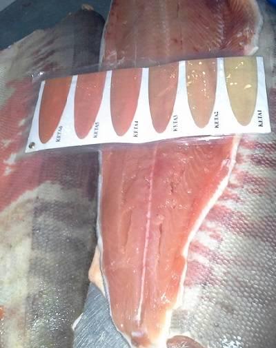 Sell Frozen Chum Salmon Fillets