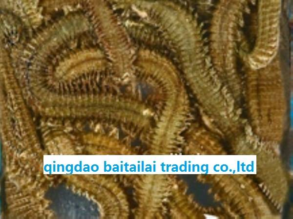 Sell fish food/worm bait/dried frozen lugworm