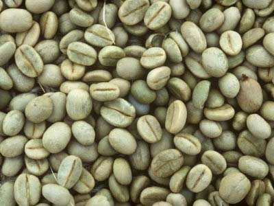 We are looking for Robusta green coffee bean (Sustainable coffee)