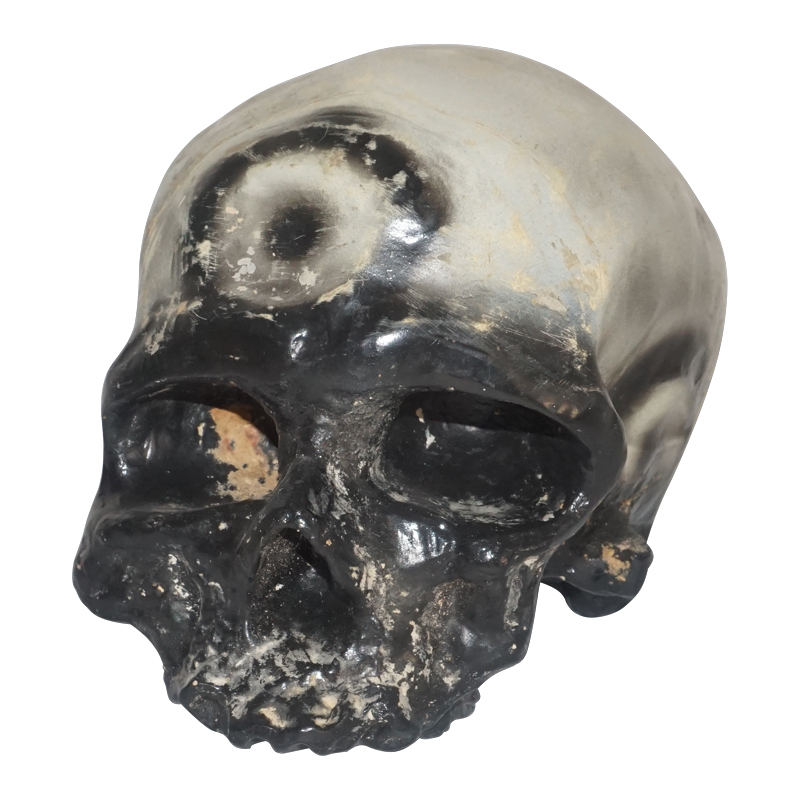 Plastic Life Size Skull Model Of Cro Magnon Man