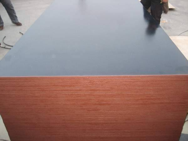 Black film faced plywood with Kingkong brand