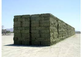 Supreme Quality Alfalfa Hay for sale