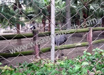 rope mesh,zoo mesh,animal enclosure,bird netting
