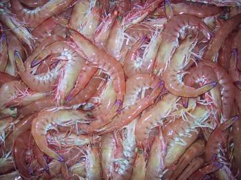 Frozen King Prawns, White Shrimps, Black Tiger Shrimps Grade A