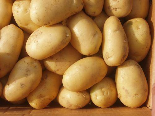 FRESH POTATOES FOR SALE