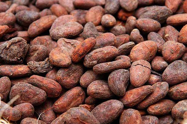 Cocoa Beans/Cocoa Powder