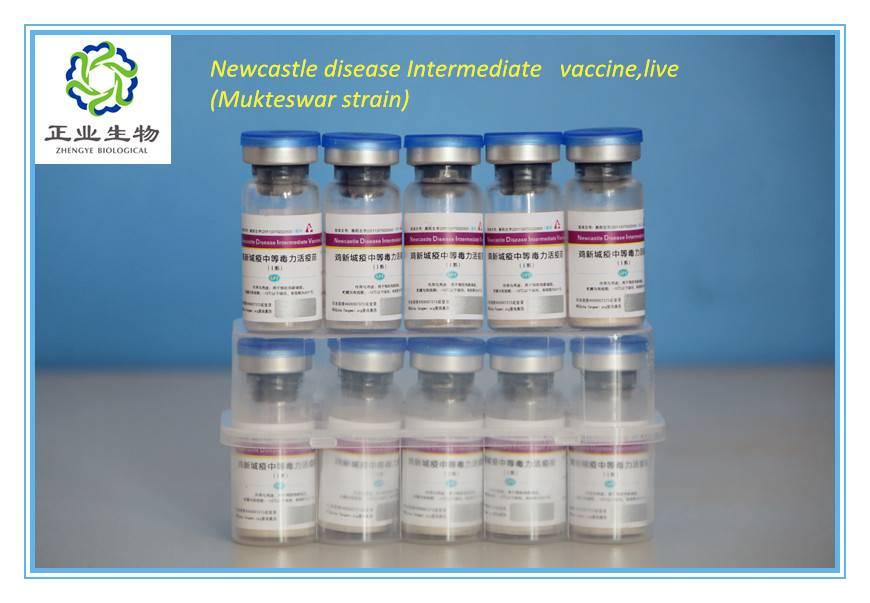 Newcastle Disease Intermediate Vaccine, Live.