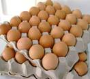 Exporters Of Chicken Eggs, Supplier Of Indian Brown Shell Eggs.