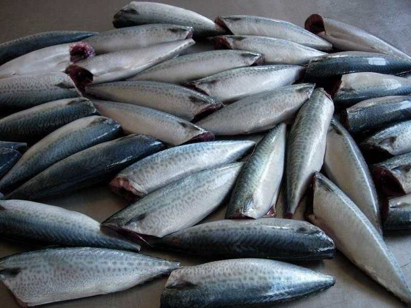 frozen whole gutted headless,tail-off scomber mackerel