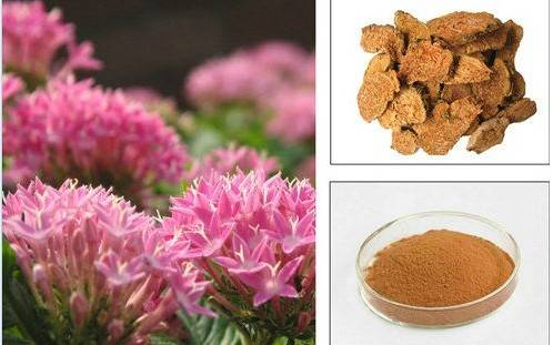 Natural 1.0%, 2.0%, 3.0% Rosavin Test by HPLC (Rose Root) GMP factory