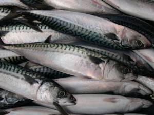 Mackerel Fish, Scomber Japonicus