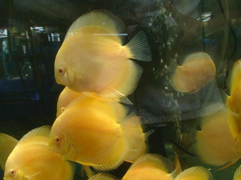 Freshwater fish wholesales